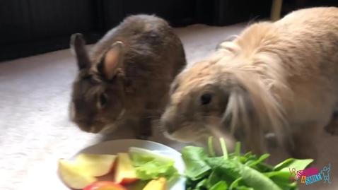 Thumbnail for entry Bunnies