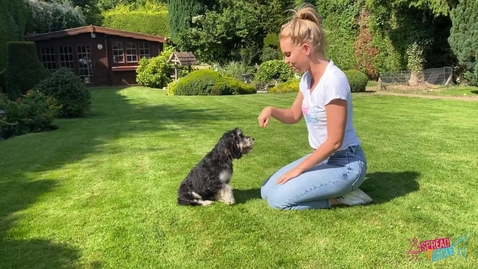Thumbnail for entry Dog Training with Dani and Dodger