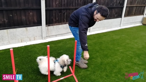 Thumbnail for entry Dexter Agility Training