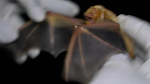Thumbnail for entry Destinee tells us about her summer capturing bats!