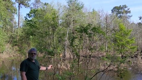 Thumbnail for entry Cephalanthus occidentalis