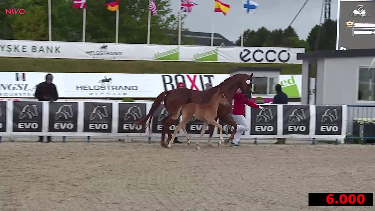 2nd part of the foal auction at Equitour Aalborg 2019