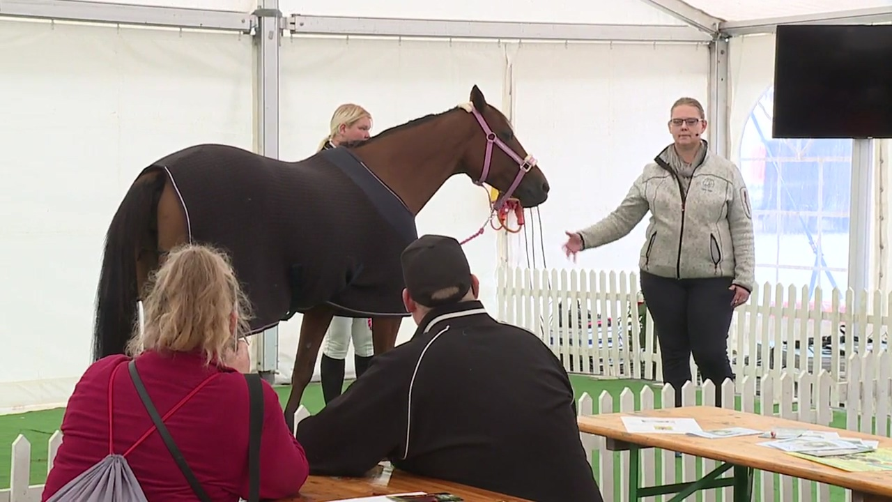 Clinic about animal telepathy at Store Hestedag 2019