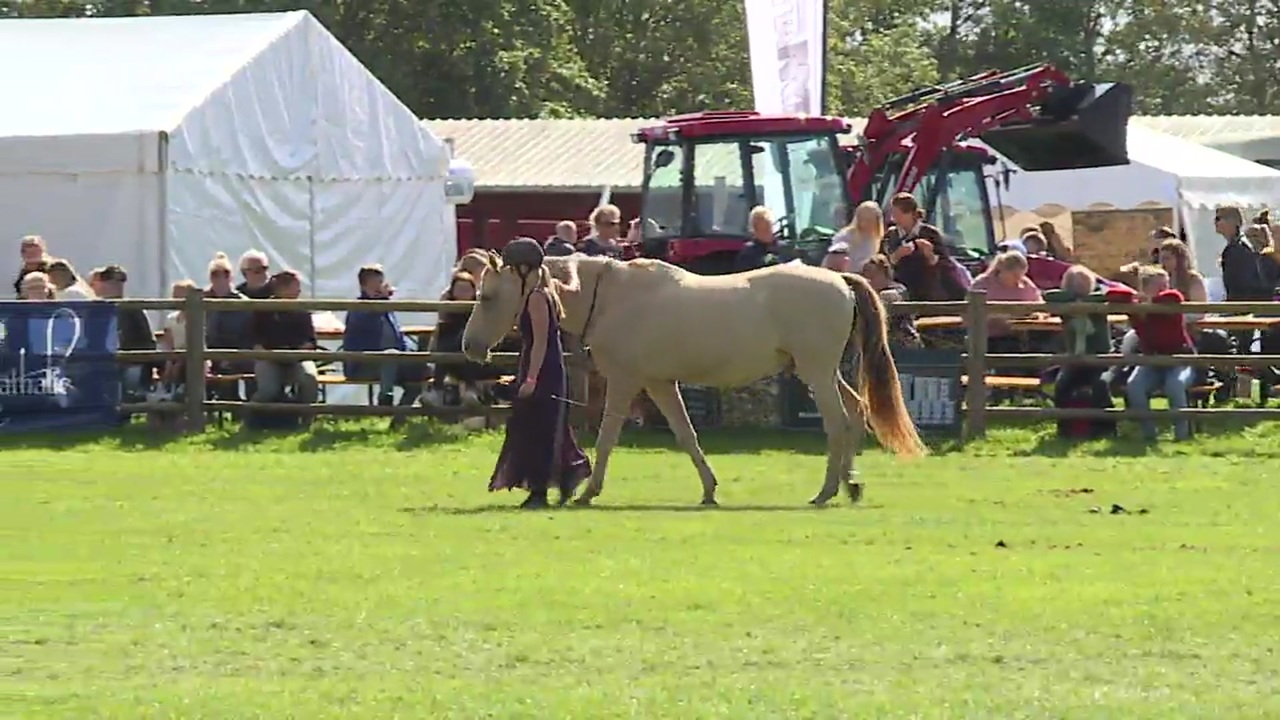 When Horses Choose, Clinic, Store Hestedag 2019