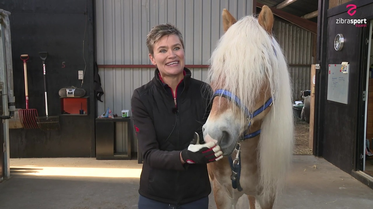 Marianne Hejlsberg: the future and the past of the haflinger