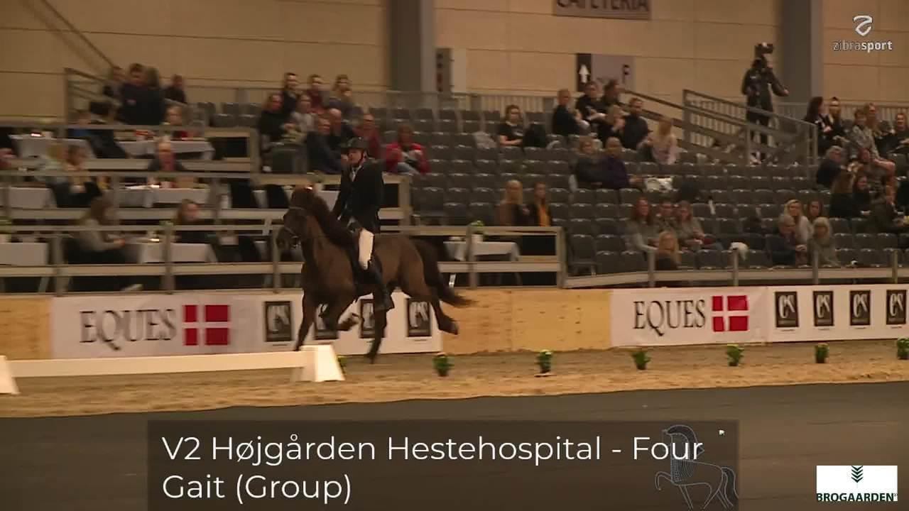 V2 Højgård Hestehospital – Four Gait (group)