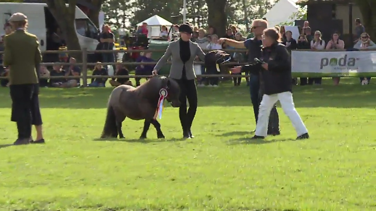 Horse and pony of the day at Store Hestedag 2019
