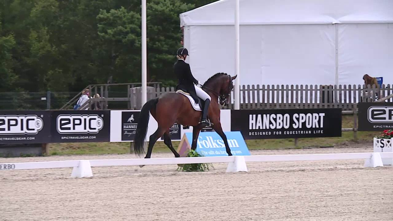 Qualifier for the 7 year young horse championship at Falsterbo Horse Show 2017