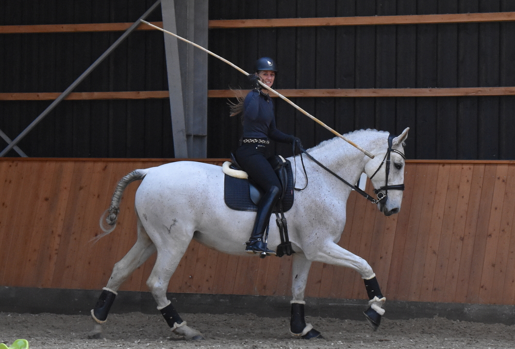What is Working Equitation?