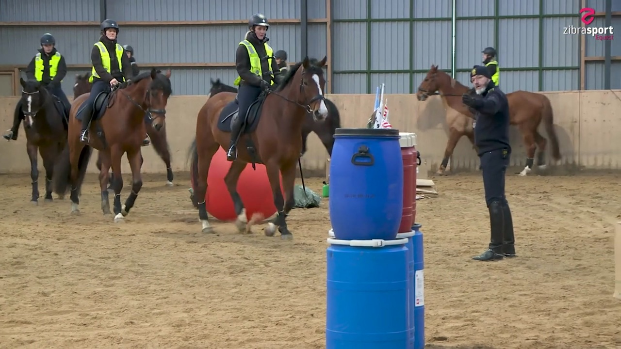 Insights from the Copenhagen police horses