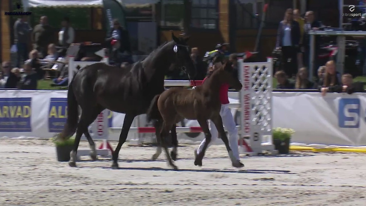 Presentation before foal auction at Equitour Aalborg 2019