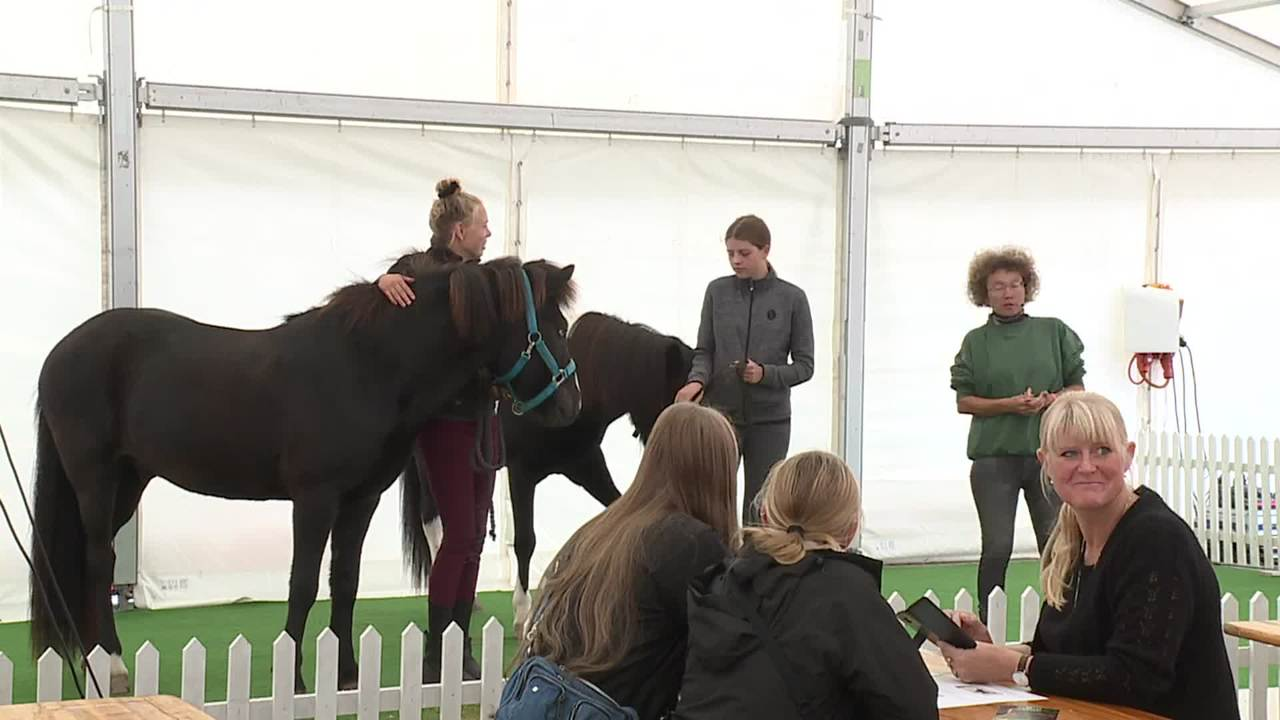 Clinic about yoga for horses at Store Hestedag 2019