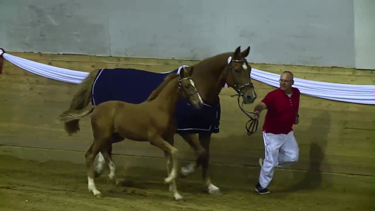 2nd part of Foal Auction North 2018 in Ikast
