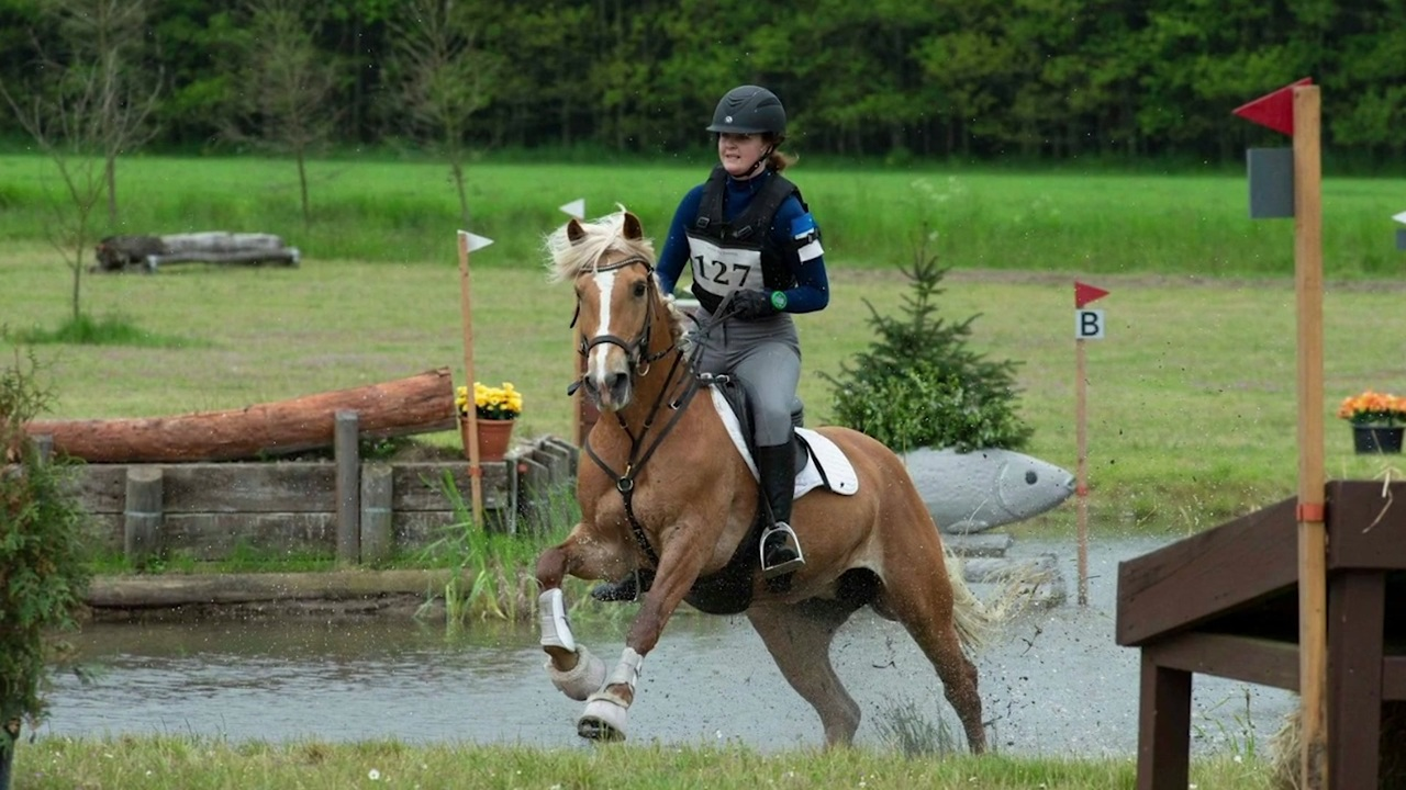 Haflinger pony competing against horses in eventing