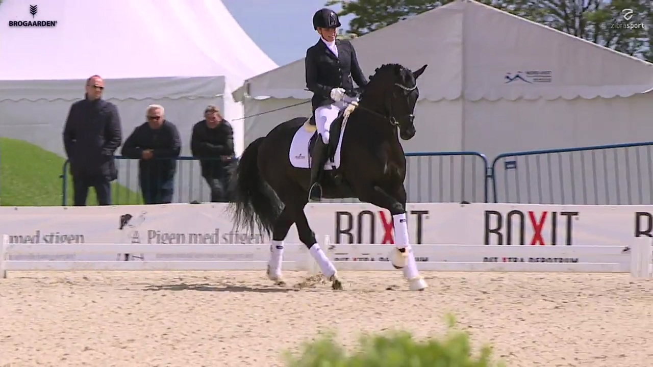 Show at Equitour Aalborg 2019