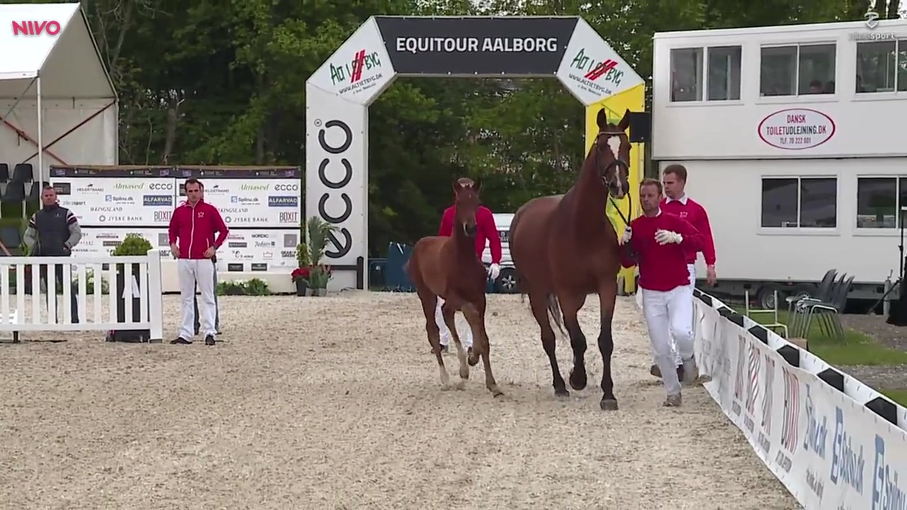 1st part of the foal auction at Equitour Aalborg 2019