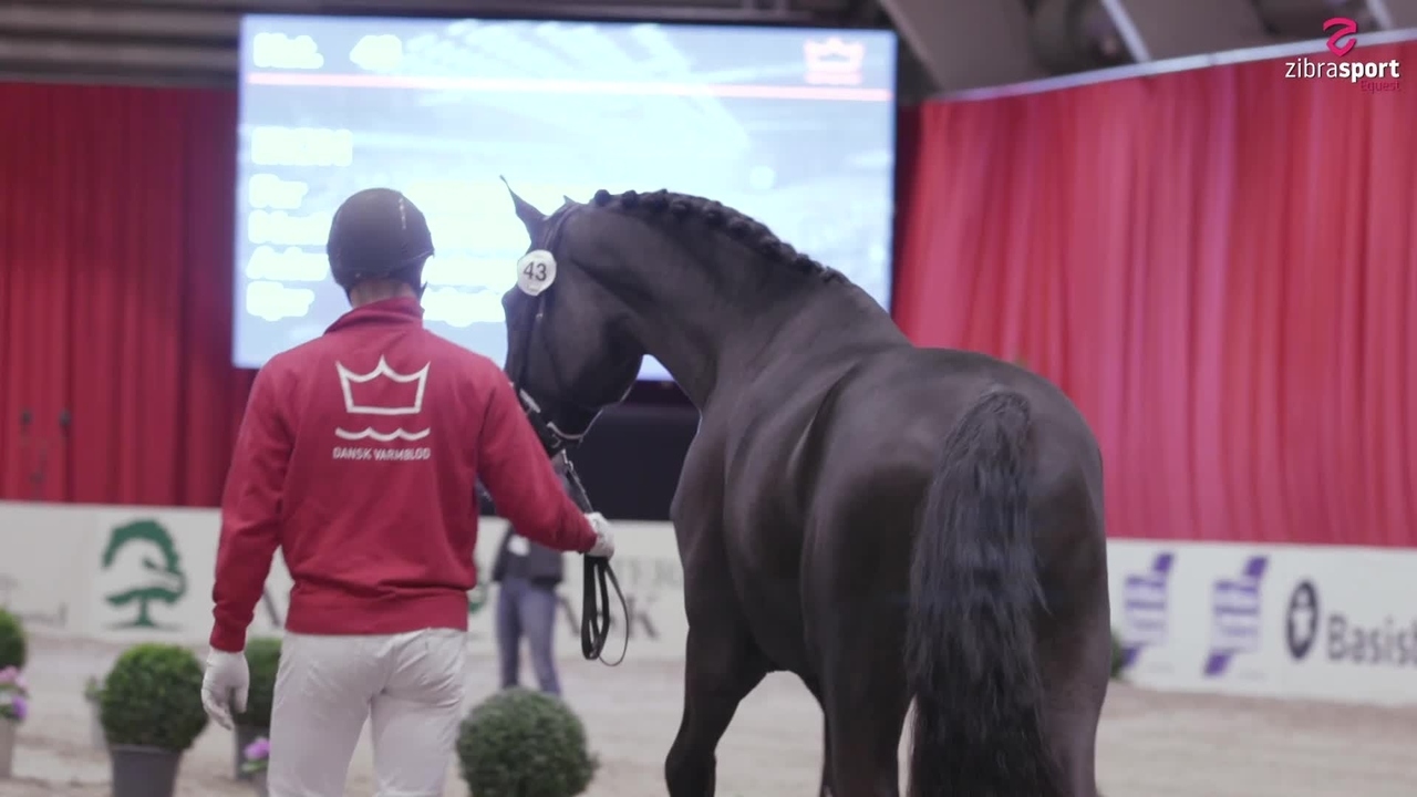 Mette Sejbjerg and her stallion Iron today
