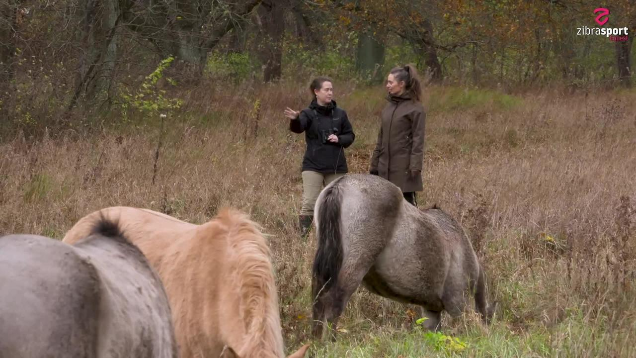 Info about the Konik Horse