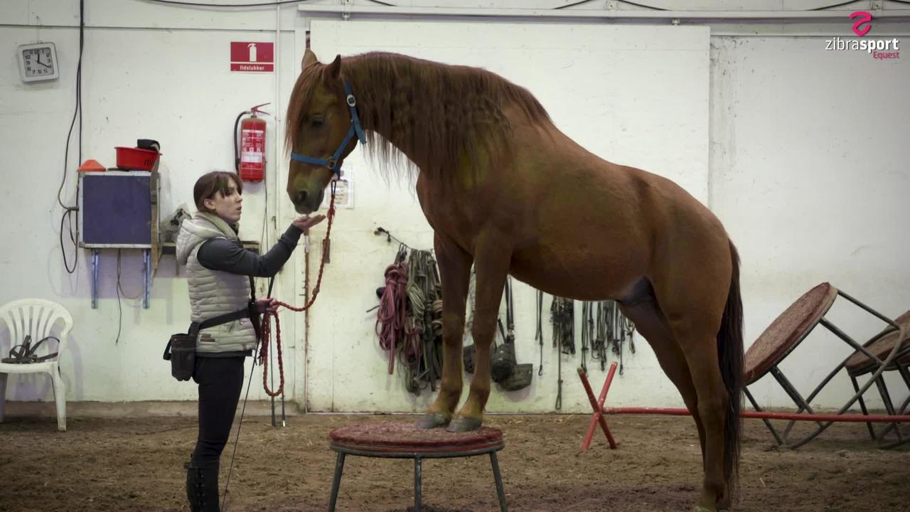 Teach your horse to step up on 'postament'