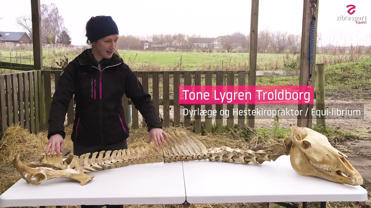 The horse Skeleton: Back and Neck (1)