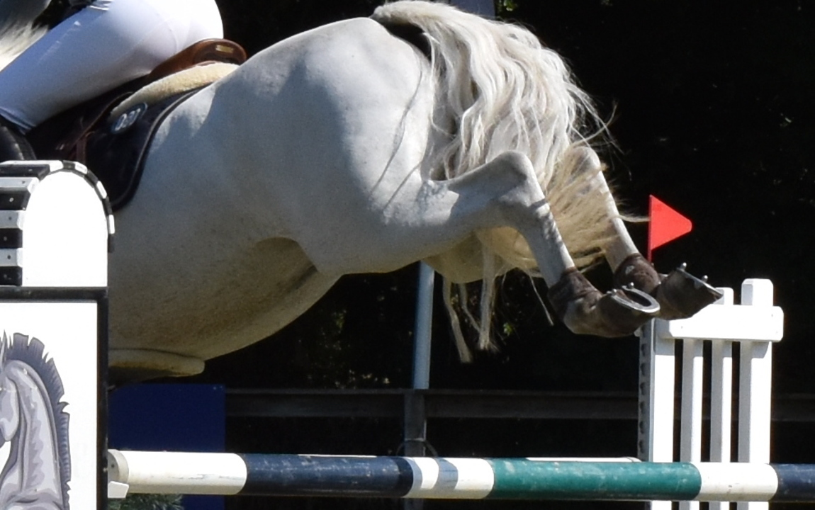 Indoor DRF-championship Jumping P/Ch