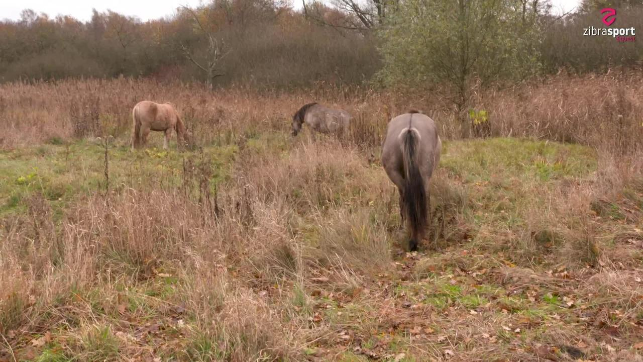 Wild horses – watch from a distance