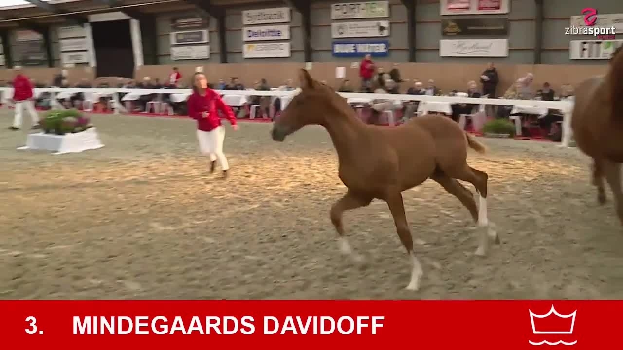 Mindegaards Davidoff –  most expensive foal at Foal Auction South