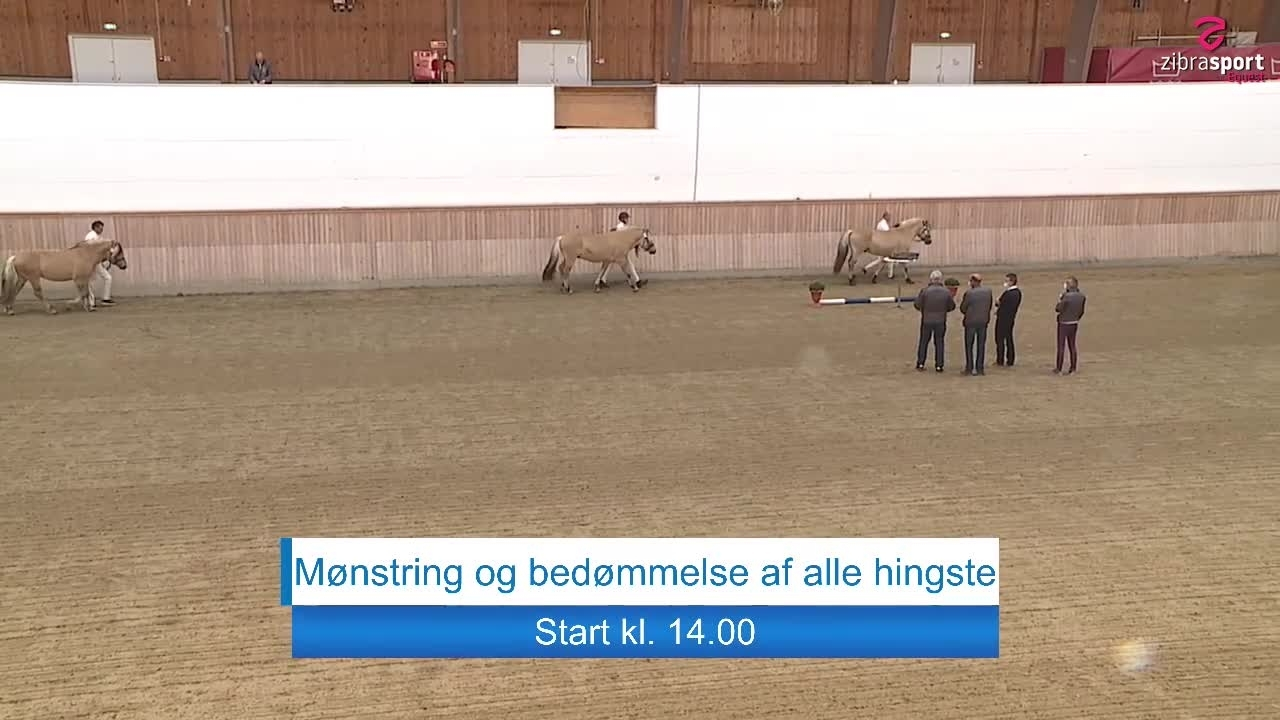 Fjordhesten Danmark's Stallion Show – Showing and evaluation of all stallions