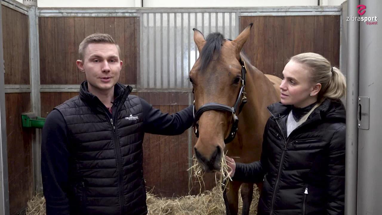 Helgstrand: How to get young stallions ready for stallion selection