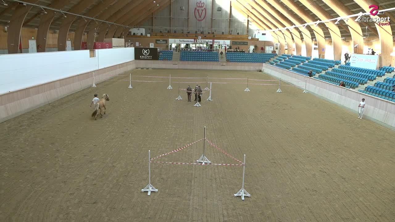 Fjordhesten Danmark's Stallion Show – Free showing of all stallions