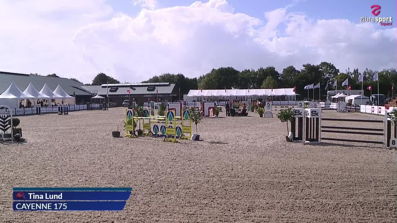 MB2** Jumping Horses (130 cm) B5