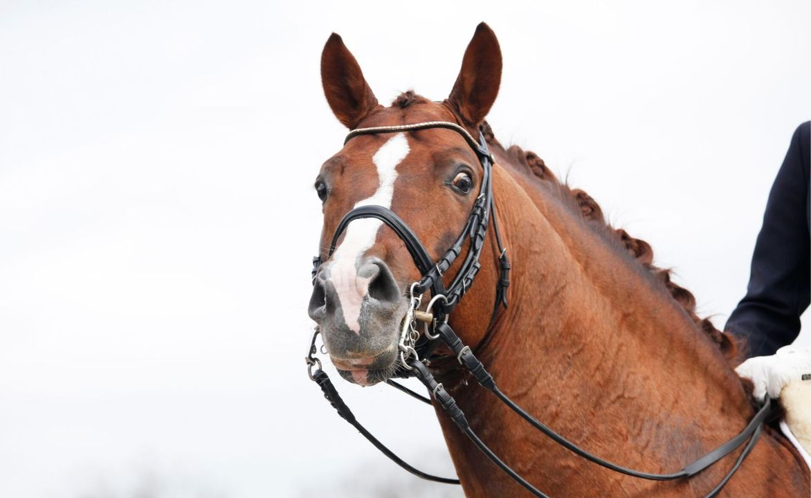 DRF-championship in dressage – Teams