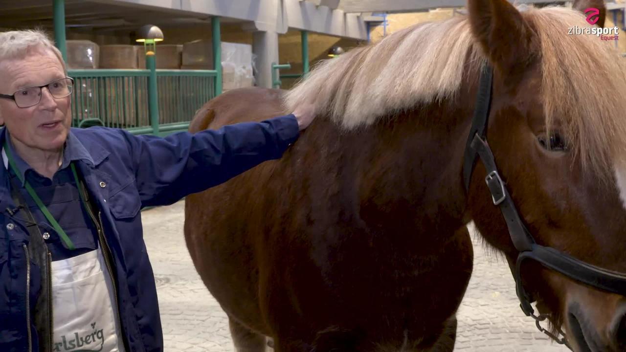 Jysk hest eller Slesviger? Den perfekte Carlsberg-hest