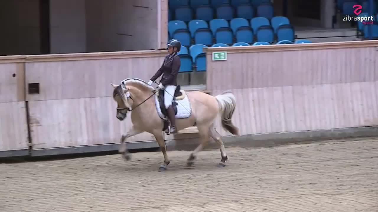 Fjordhesten Danmark's Stallion Show – Performance testing of stallions and presentation under saddle