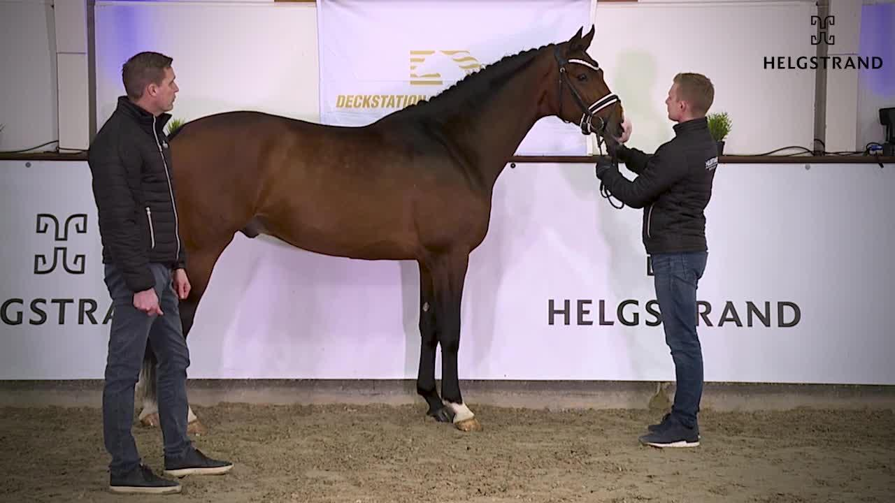 Hesselhøj Downtown – Helgstrand Stallionshow 2021