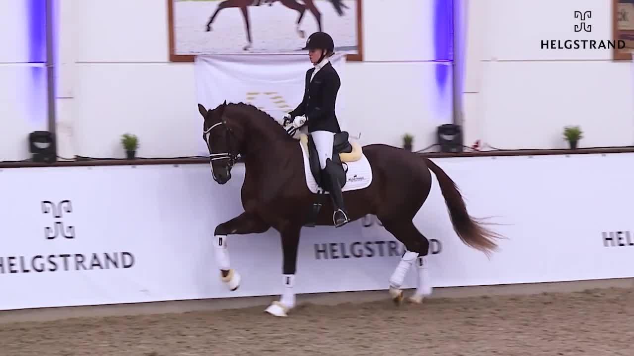 Fortunate – Helgstrand Stallionshow 2021