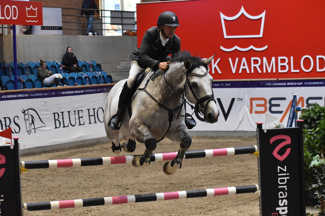 Christmas Show Warm Up Hest