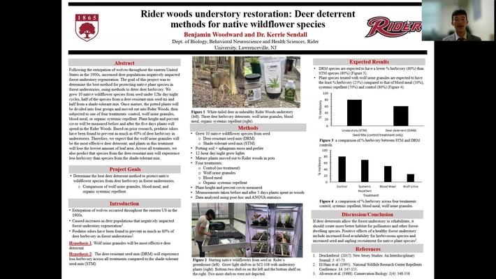 Woodward: Rider Woods Understory Restoration: Deer Deterrent Methods for Native Wildflower Species
