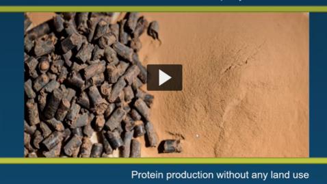Thumbnail for entry Jagten på bæredygtige proteiner