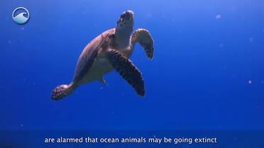 Image of: Marine Mammals Smithsonian Ocean Smithsonian Ocean Smithsonian Institution Endangered Ocean Smithsonian Ocean