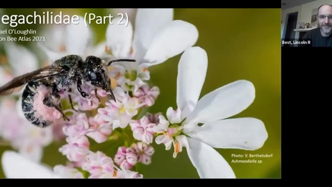 Thumbnail for entry Mentor Session with Michael O'Loughlin - Megachilidae Part 2