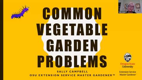 Thumbnail for entry COMMON VEGETABLE GARDEN PROBLEMS