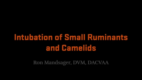 Thumbnail for entry Intubation of Small Ruminants and Camelids