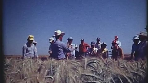 Thumbnail for entry Warren Kronstad, Norman Borlaug and Oregon farmers studying CIMMYT wheat at the CIANO testing location near Ciudad Obregón, Mexico. April 1979.