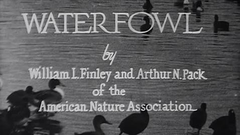 "Thumbnail for entry ""Waterfowl,"" ca. 1935."