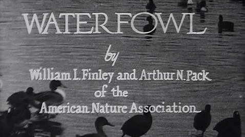 """Thumbnail for entry """"Waterfowl,"""" ca. 1935."""