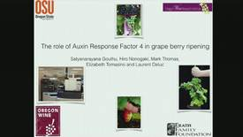 Thumbnail for entry Deluc_ARF4 in Berry Ripening Seminar 4-25-17