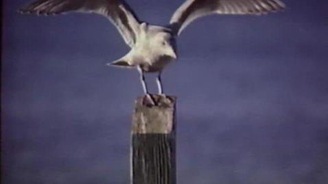Thumbnail for entry Hatfield Marine Science Center Slide-Tape Program, ca. 1992. (2 of 2)