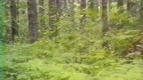 """Thumbnail for entry """"Reforestation: It's No Accident"""""""