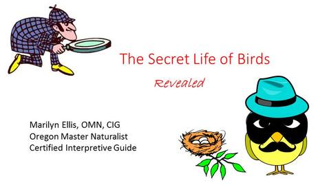 Thumbnail for entry 8A-Ellis-Part1of2The secret life of birds_Abbreviated 60 minute